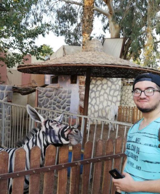 Ein Esel in einem ägyptischen Zoo